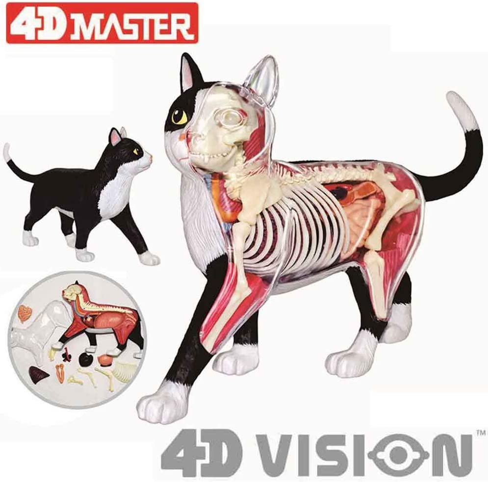 Black and White Cat Animal Organs Model 4D Cat Anatomy Model 28 Parts Animal Teaching Anatomical Model for Medical Educational Training