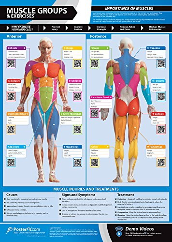 Muscle Groups & Exercises Gym Poster | Anterior & Posterior Muscles & Exercises | Laminated Gym & Home Poster | FREE Online Video Training Support | Large Size 33