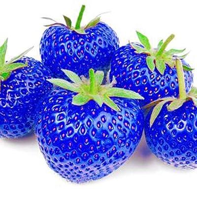 Onbay1 Organic Fruit Seeds Bonsai High Germination Rare Home Strawberry Seeds Fruits : Garden & Outdoor