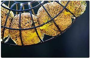 LESGAULEST Doormat Floor Rug/Mat (23.6 x 15.7 inch) - Fat Balls Food Bird Seed Feed Eat Network Hang