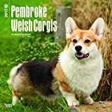 Pembroke Welsh Corgis - 2017 Calendar 12 x 12in
