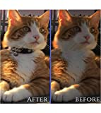 Breakaway Cat Collar- Petbemo Reflective Cat