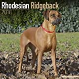 Rhodesian Ridgeback Calendar - Dog Breed Calendars - 2017 - 2018 wall Calendars - 16 Month by Avonside