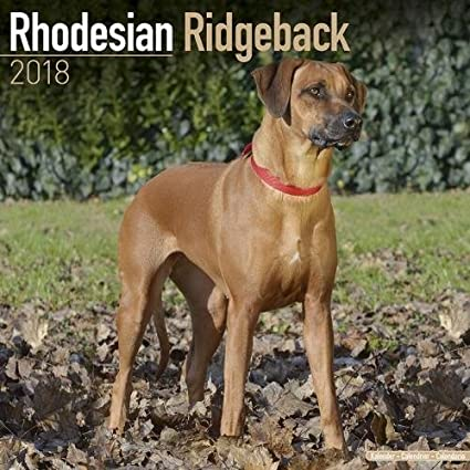 Rhodesian Ridgeback Calendar - Dog Breed Calendars - 2017-2018 wall Calendars - 16 Month by Avonside
