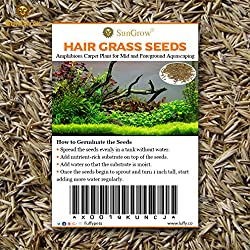 SunGrow, Hair Grass Seeds, 10 Grams, Seeds Can Grow Up to 2 Inches, Mid or Foreground Tank Decor, Carpet Aquarium Plant, Short Germination Time, Creeper Plant Covers Tank Surface Quickly, 1 Pack