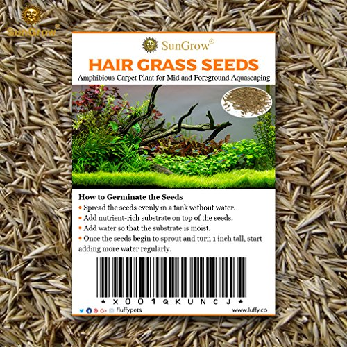SunGrow Hair Grass Seeds, 10 Grams, Seeds Can Grow Up to 2 Inches, Mid or Foreground Tank Decor, Carpet Aquarium Plant, Short Germination Time, Creeper Plant Covers Tank Surface Quickly, 1 Pack