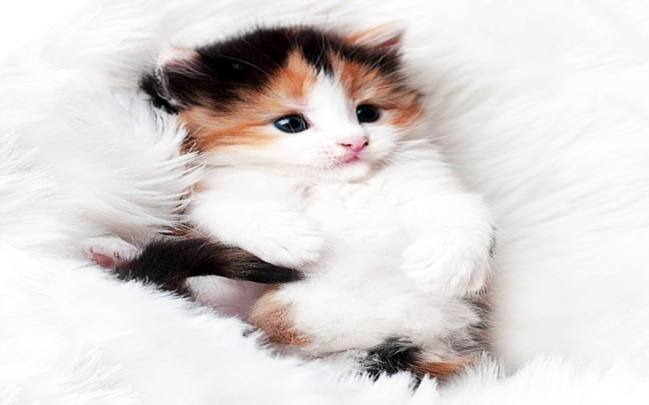 Amazon Cute Cats Live Wallpapers Appstore For Android