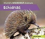 Echidnas (World's Weirdest Animals)