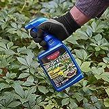BioAdvanced 704630D Brush Killer Plus, Poison Ivy