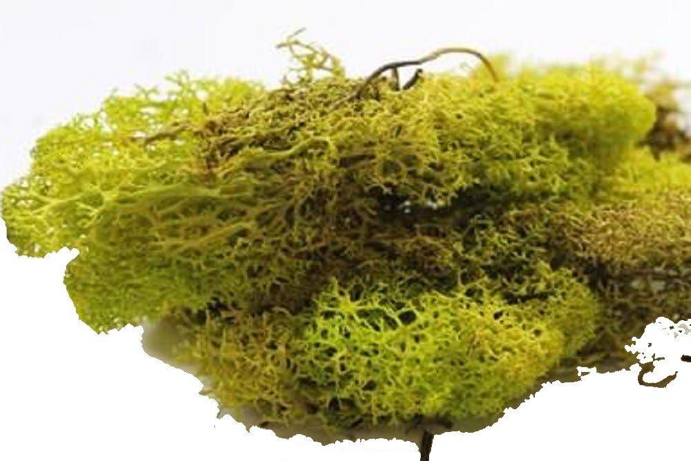 Melody Jane Dolls House Light Green Lichen 12s Garden Scenic Accessory