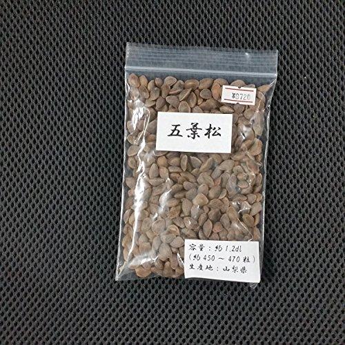 盆栽種子:五葉松 *【お得】【大袋】 B078CXVLZL