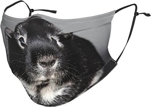 pengyong Face Mask Silver Fox Guinea Pig Mouth Cover Reusable Washable Protect(Two Filters)