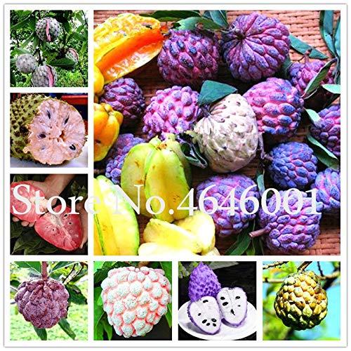 Pinkdose Sale 8 10 pcs//Bag Rare Giant Graviola Soursop Bonsai Guanabana Annona Muricata Tropical Fruit Tree sweetsop Plant for Home Garden