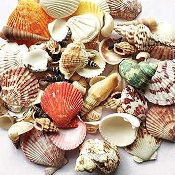 Natural Shells Mini Craft Seashells Nassa Sea Shells