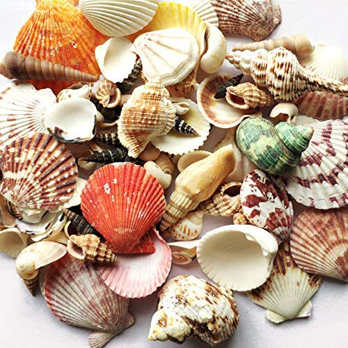 Wankko 80 Pcs Sea Shells Mixed Beach Seashells, Colorful Natural Seashells Perfect Accents for Candle Making,Home Decorations, Beach Theme Party Wedding Decor, DIY Crafts, Fish Tank and Vase Fillers