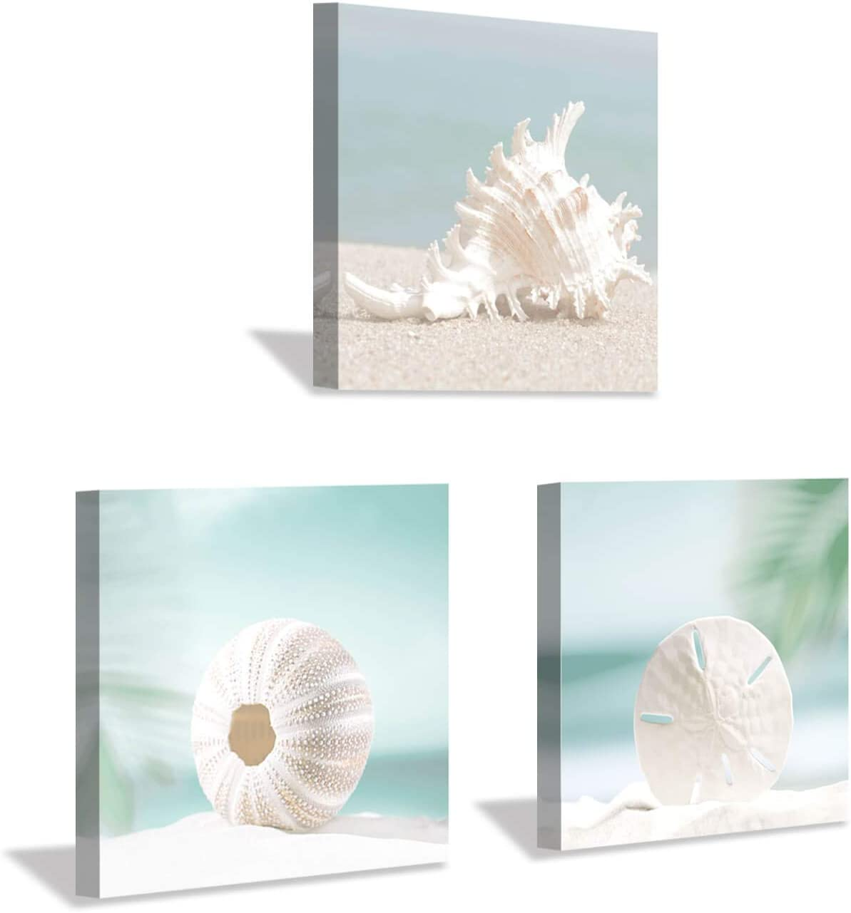 Hardy Gallery Seashells Wall Art Canvas Print: Seashore Scene Artwork Painting for Wall Decor for Hallway (12''x12''x3pcs)