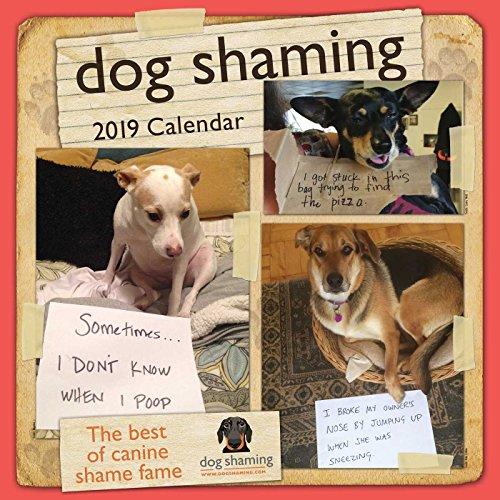 Dog Shaming 2019 Candle< Review