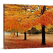 Canvas On Demand Premium Thick-Wrap Canvas Wall Art Print entitled New York State, Erie County, Chestnut Ridge Country Park, Leaves of maple tree on the ground