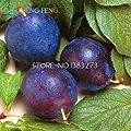 New 1bag=10pcs Japanese Purple Plum Seeds Exotic Delicious Fruit Seeds Bonsai Tree Child Diy Planter Home & Garden Plants Seed Sale