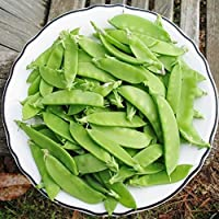 David's Garden Seeds Pea Snow Mammoth Melting Sugar EB111OP (Green) 100 Heirloom Seeds
