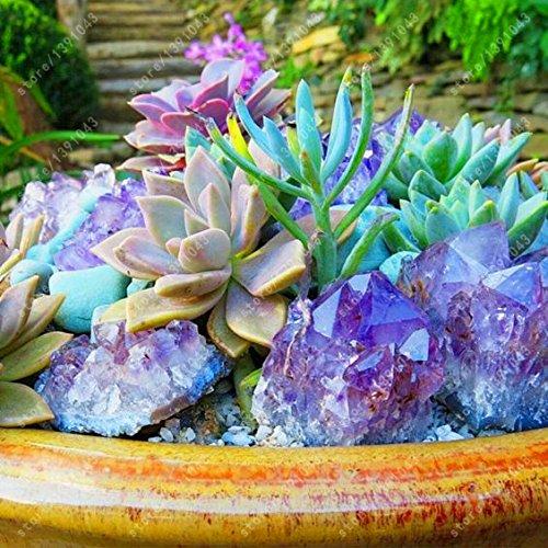 200 pcs Succulent seeds Lithops Pseudotruncatella succulent plants for DIY home garden