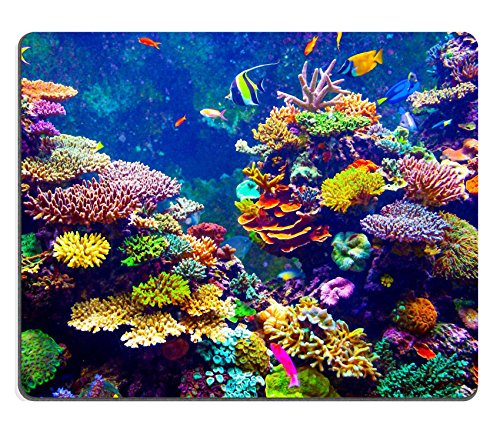 Price comparison product image MSD Mousepad Coral Reef and Tropical Fish in Sunlight Singapore aquarium Image 35304339 Customized Tablemats Stain Resistance Collector Kit Kitchen Table Top DeskDrink Customized Stain R