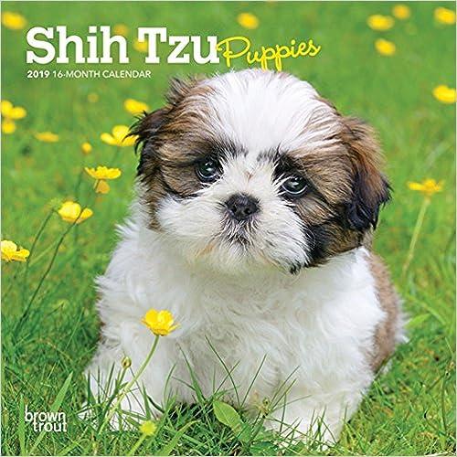 Shih Tzu Puppies 2019 Calendar