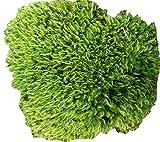 Tin Roof Treasure Fresh Broom (Mood) Moss, 6