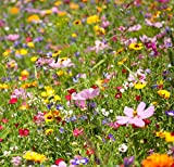 Wildflower Seeds Annual Quick Blooming Mix - Large 1/2 Ounce Packet Over 3,500 Open Pollinated Seeds (1)