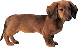 "Paper House Productions 3.75"" x 2"" Die-Cut Dachshund Dog Shaped Magnet for Refrigerators and Lockers"