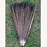 20Pcs Natural Pheasant Tail Feathersfor Craft or Decoration 25-30cm Long
