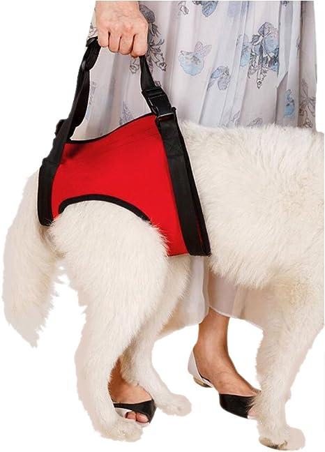 Arnés de apoyo con tiras para transportar perros desde las patas ...