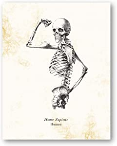 Homo Sapiens Human Skeleton Vintage Drawing - Living Room, Office, Bedroom Decor - Science Classroom Artwork - 11 x 14 Unframed Print - Great Gift for Anatomy Lovers, Scientists, Teachers, Doctors