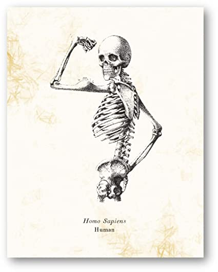Homo Sapiens Human Skeleton Vintage Drawing , Living Room, Office, Bedroom  Decor , Science Classroom Artwork , 11 x 14 Unframed Print , Great Gift for