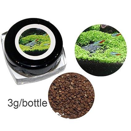 nulala 10g Plantas de acuario Semillas Acuático Doble hoja Alfombra Agua Hierba Fácil de sembrar semillas
