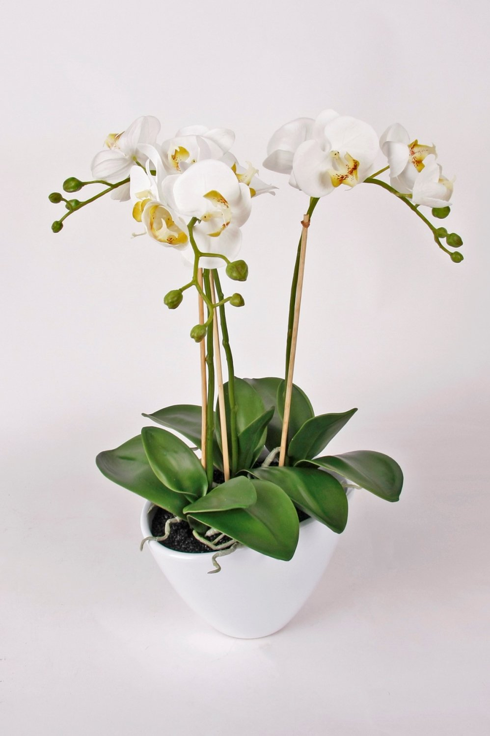 Artificial phalaenopsis orchid lahna in a small pot 3 sprigs artificial phalaenopsis orchid lahna in a small pot 3 sprigs white 18 45 cm silk orchid artificial flower artplants amazon kitchen dhlflorist Gallery
