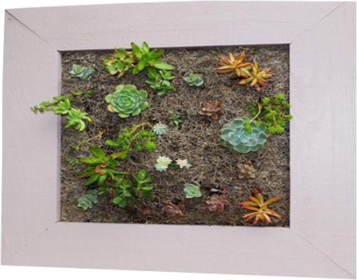 Amazon Com Vertical Garden Wall Mounted Planter Box Building Plans Diy Herb Pot Decor Kitchen Dining