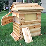 Golden Palace Auto Flow Beehive 7pcs Flow Frame Super Box Free Flow Frame (Outer hive 7pcs flow frame set)