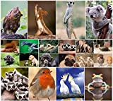 Pack of 20 'FUNNY ANIMALS' postcards, a set of 20 different cards with comical and humorous animals from around the world