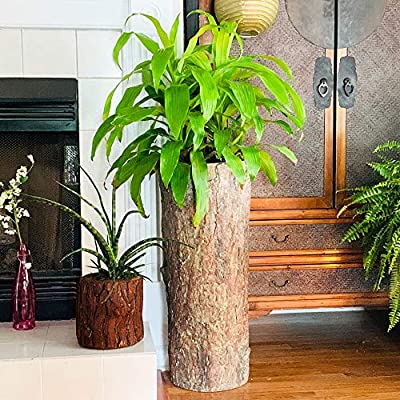 Country Corner Vintage Plant And Fern Stand Unique Indoor Stump Planter And Flower Pot Tall Rustic Indoor Cement Resin Flowerpot Buy Online At Best Price In Uae Amazon Ae