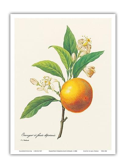 Amazon Orange Fruit