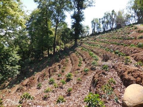 5LBS Guatemala Agua Zarca ll Unroasted Green Coffee Beans