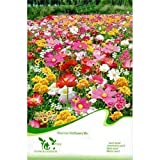 SODIAL(R)1 Bag 200 Seed Wild flowers Mix Seed