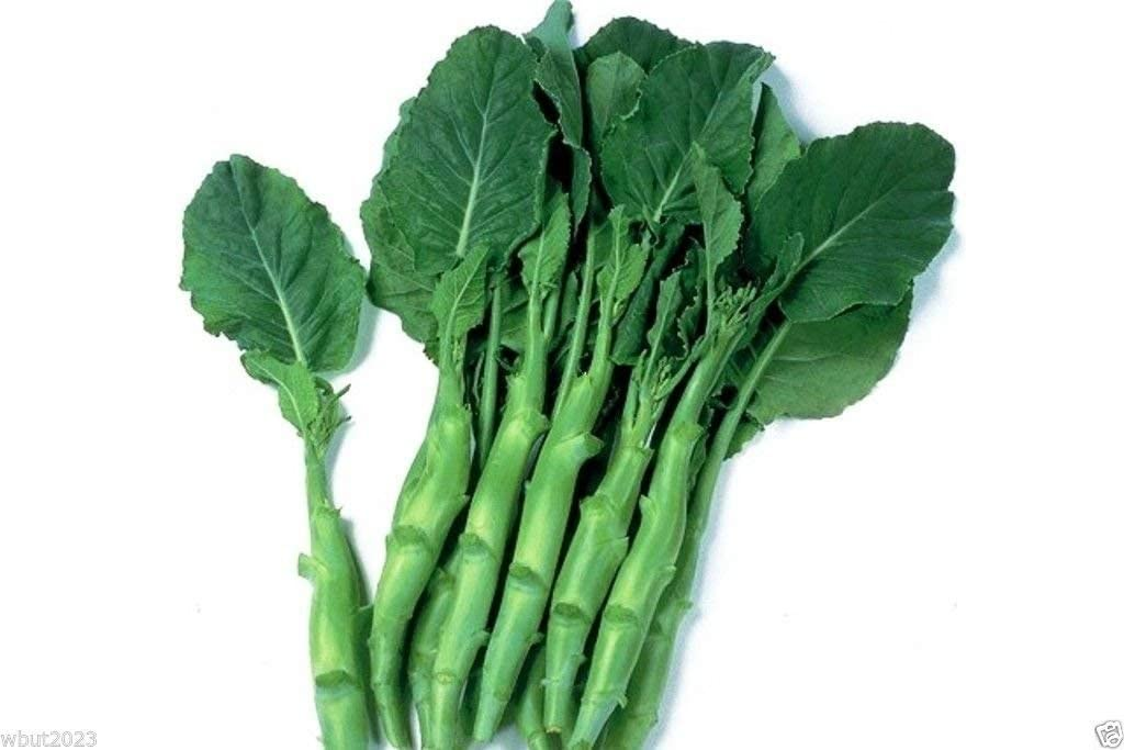 Chinese Broccoli Gai Lan Seeds Jie Lan Seeds Kai Lan Asian Chinese Kale Seeds