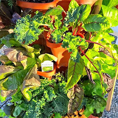 3 Tier Strawberry Planter: Mr. Stacky 5-Tier Strawberry Planter Pot, 5 Pots