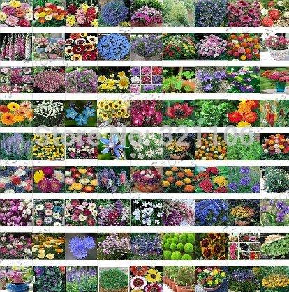 Pflanzensamen Garten 200pcs süße Erbse