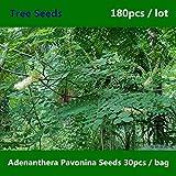 Shopmeeko ^^Mutual Love Bean Adenanthera Pavonina ^^^^ 180pcs, Family Fabaceae Red Lucky ^^^^, Novel Plant Xiang Si Dou Acacia Coral ^^^^
