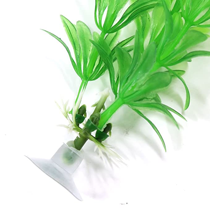 Amazon.com : eDealMax Plantas 10 Pedazo Verde de la hierba acuario ornamento Con Sucker Base : Pet Supplies