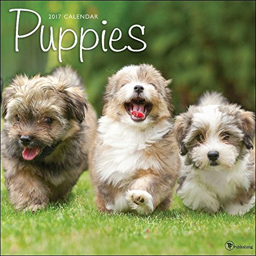 TF Publishing Puppies Office 2017 Wall Calendar (17-1011)