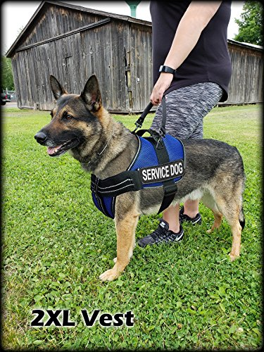 Activedogs Service Dog Kit Airtech Mesh Service Dog Vest Harness + Free Registered Service Dog ID + Clip-on Bridge Handle + 30 ADA/Federal Law Cards + Service Dog Travel Tag (L, Blue) by Activedogs (Image #2)